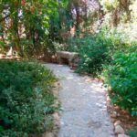 Finca-Urlaub für Radsportler: Finca Sonblanch - Garten 2